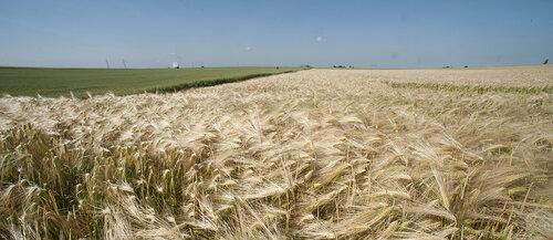 Le cluster AgreenTech Valley vient de lancer l'édition 2021 de ses deux prix visant à innover dans la filière végétale agricole: le grand prix Xavier Beulin «agriculteurs innovants» et le prix AgreenTech Valley «Startup AgTech». Tous deux permettent