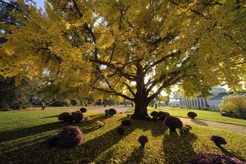 http://www.orleans-metropole.fr/fileadmin/orleans/MEDIA/diaporama/jardin-plantes/jp001.jpg